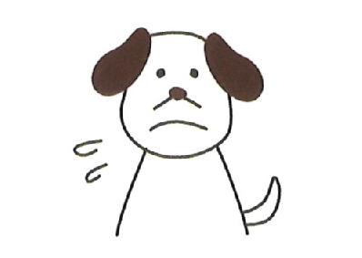 高齢ペットでシャンプーがストレスになるときに